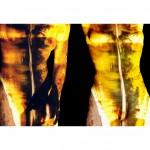 Concepcion, Chili, 2000