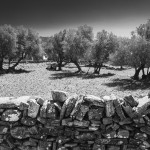 Sifnos, Grèce, 2014