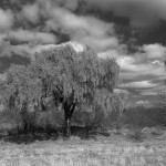 Valle de la luma, Argentine, 2013